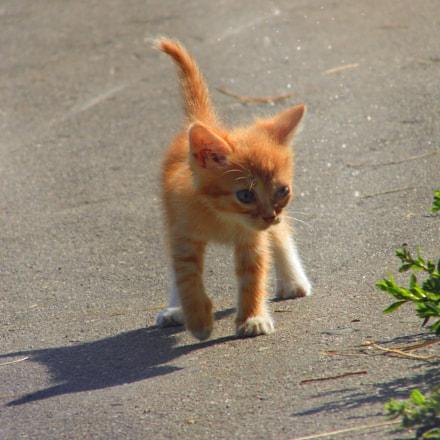 Котёнок солнца, Panasonic DMC-LZ20
