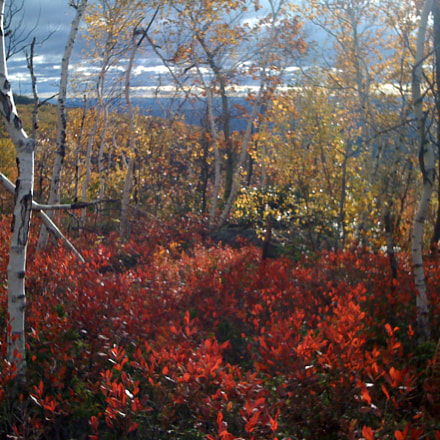 New Paltz, Apple iPhone 3G
