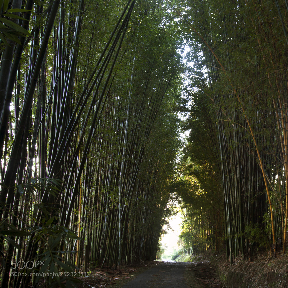Photograph Bamboos by Cristobal Garciaferro Rubio on 500px