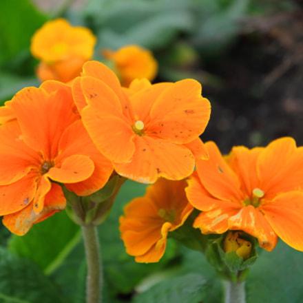 Orange flowers, Canon EOS 70D, Canon EF-S 10-22mm f/3.5-4.5 USM