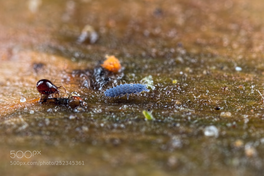 The Mite and The Springtail