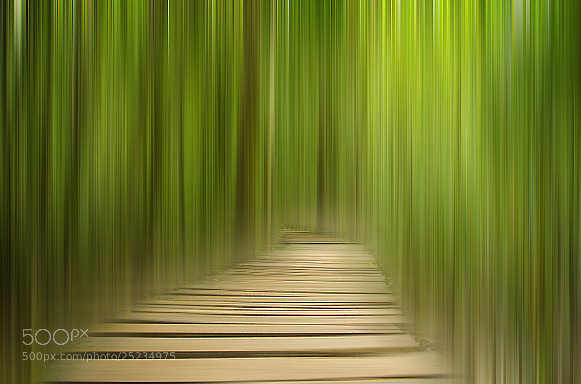 Photograph WAY HOME by Aryz Varias on 500px