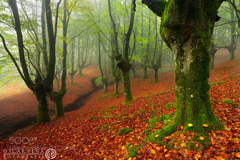 Photograph - Forest gifts - by Oscar  Peña on 500px