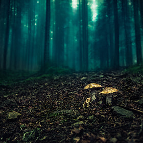Darkness by Bastien HAJDUK (Troudd)) on 500px.com