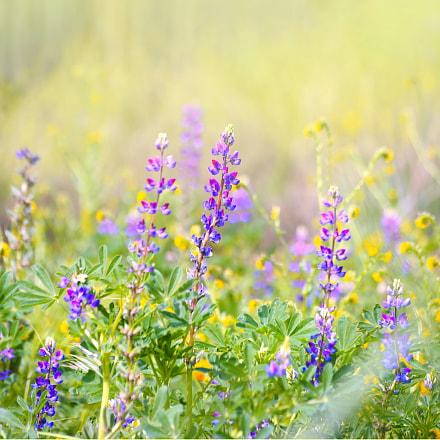Spring Scene, Nikon D750, Sigma 70-300mm F4-5.6 APO Macro Super II