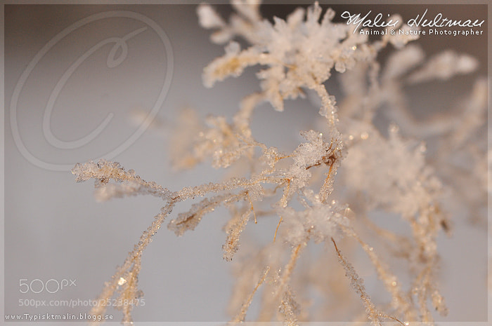 Photograph Snow crystals by Malin Hultman on 500px
