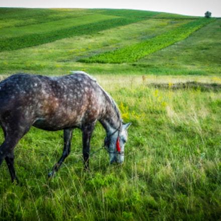 Grey horse, Panasonic DMC-LZ8