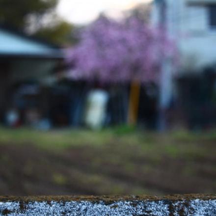 Unfocused Sakura, Canon EOS KISS X7I, Canon EF-S 55-250mm f/4-5.6 IS STM