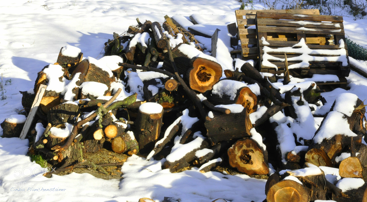 Photograph Wood and Snow by Cinzia Planchenstainer on 500px