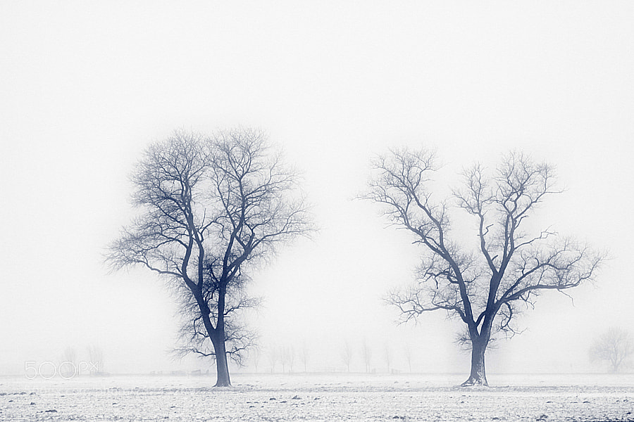 Photograph White silence by Theo Peekstok on 500px