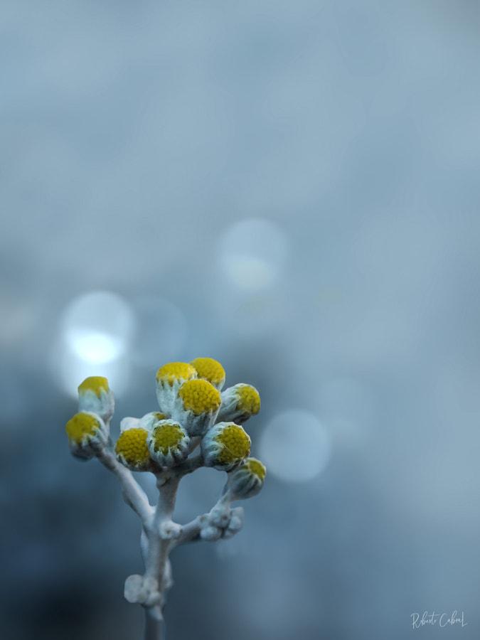 A cold day de Roberto Cabral │Image & Photography en 500px.com