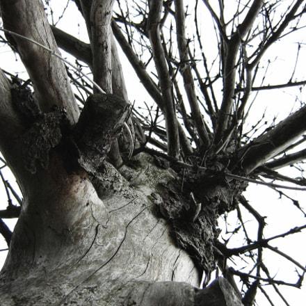 drzewo, Canon POWERSHOT A430