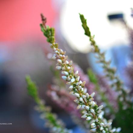 Untitled, Nikon D5100, AF Zoom-Nikkor 35-135mm f/3.5-4.5 N
