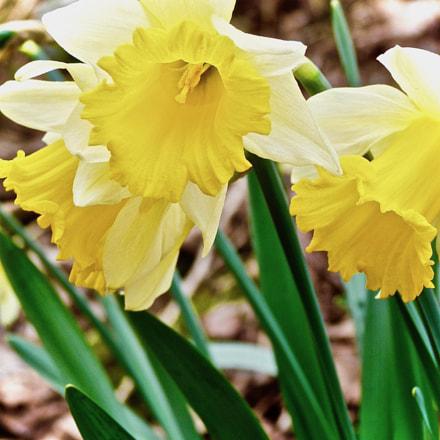 Beautiful yellow flower! , Panasonic DMC-FZ48