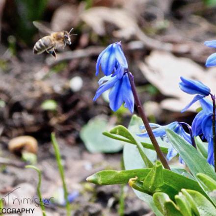 Bee & flower, Panasonic DMC-FZ48