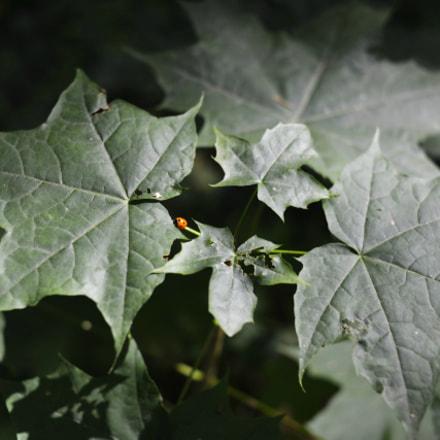ceabad orig, Nikon D600, AF Nikkor 35mm f/2D
