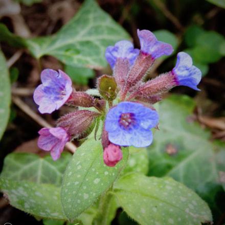 Purple flowers are..., Panasonic DMC-FZ48