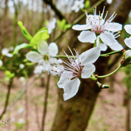 Blooming Blossom, Panasonic DMC-FZ48