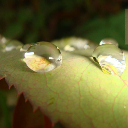 水滴, Sony DSC-T30