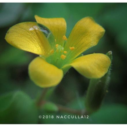 Yellow Flower, Canon IXUS 285 HS