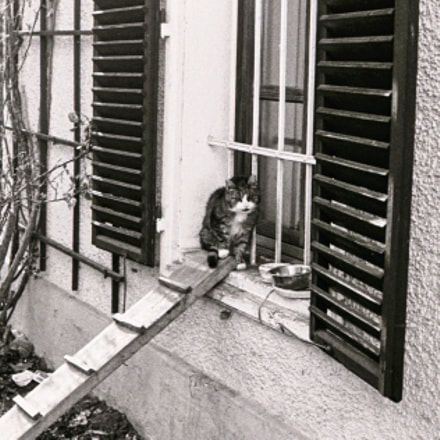 Very old cat sitting, Nikon FE