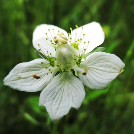 Flower?, Canon IXUS 145