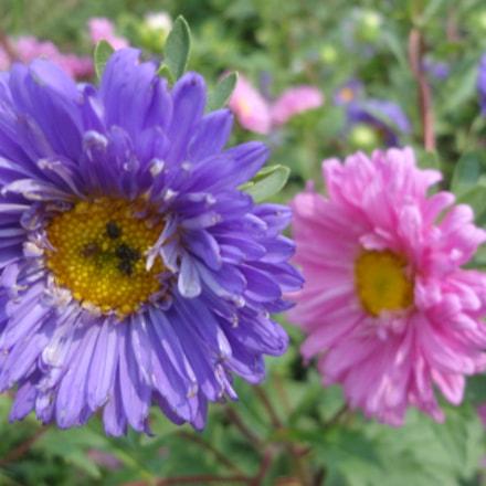 bloomy, Sony DSC-W570