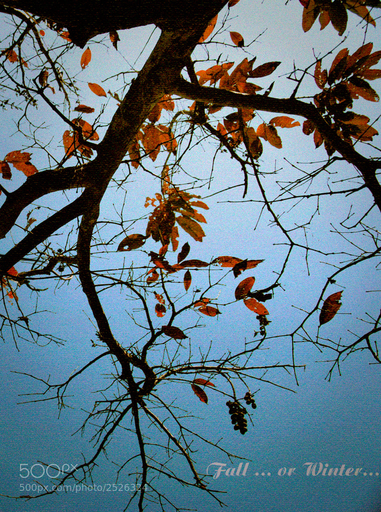 Photograph Fall or Winter by kinh kha on 500px