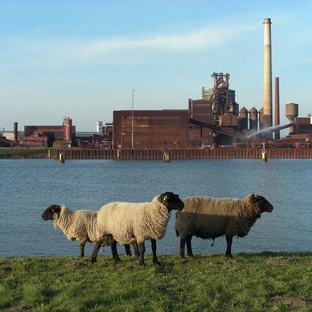 Schafe und Stahlwerk, Nikon COOLPIX S10