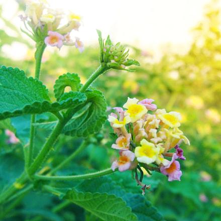 Bright flowers, Sony DSC-H3