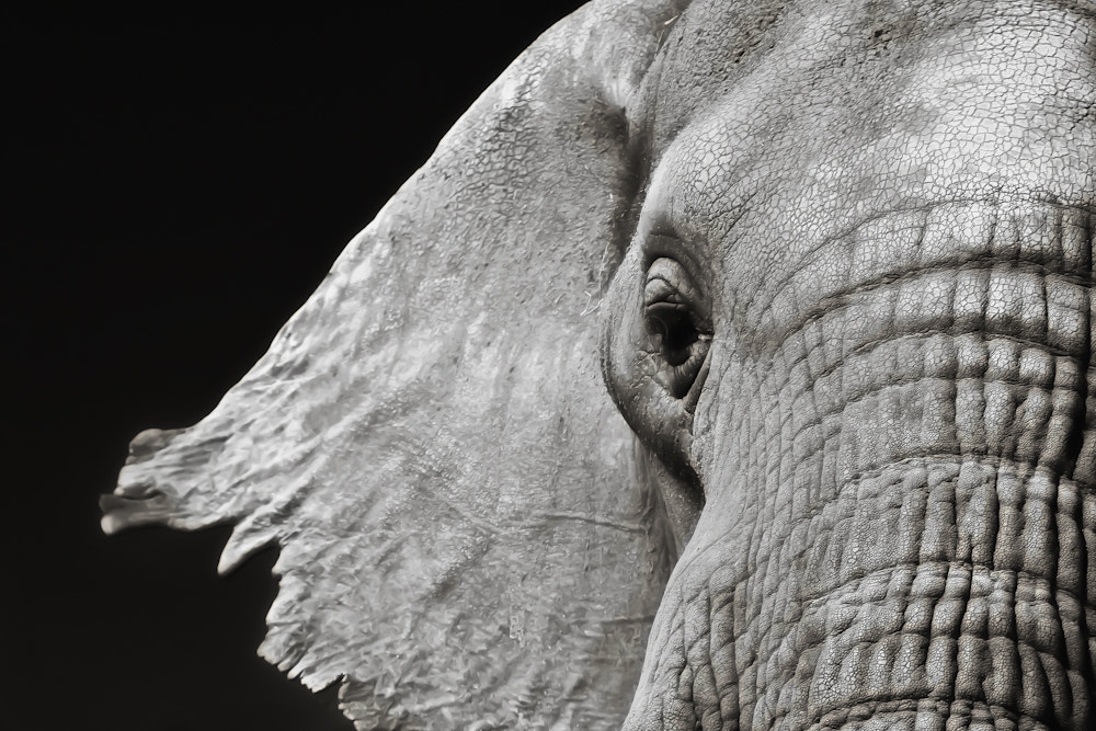 Photograph Elephant by Mario Moreno on 500px