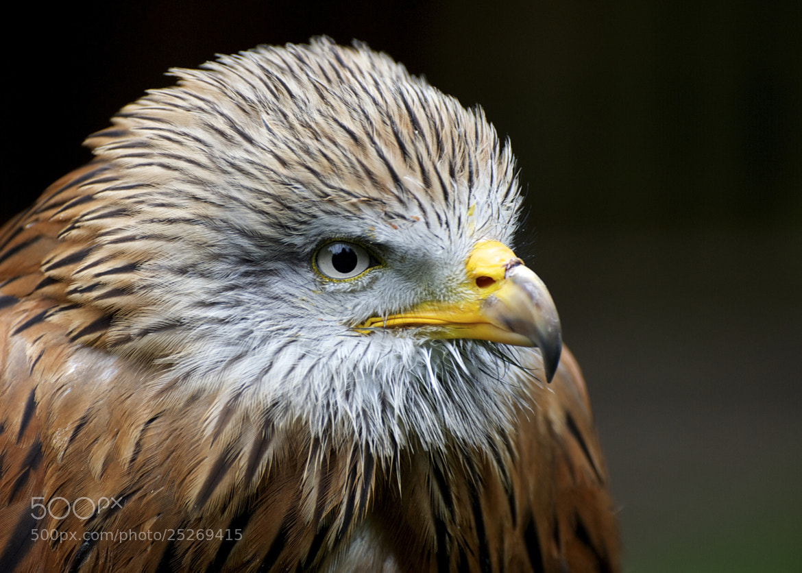 Photograph Eagle by Karen O'Reilly on 500px