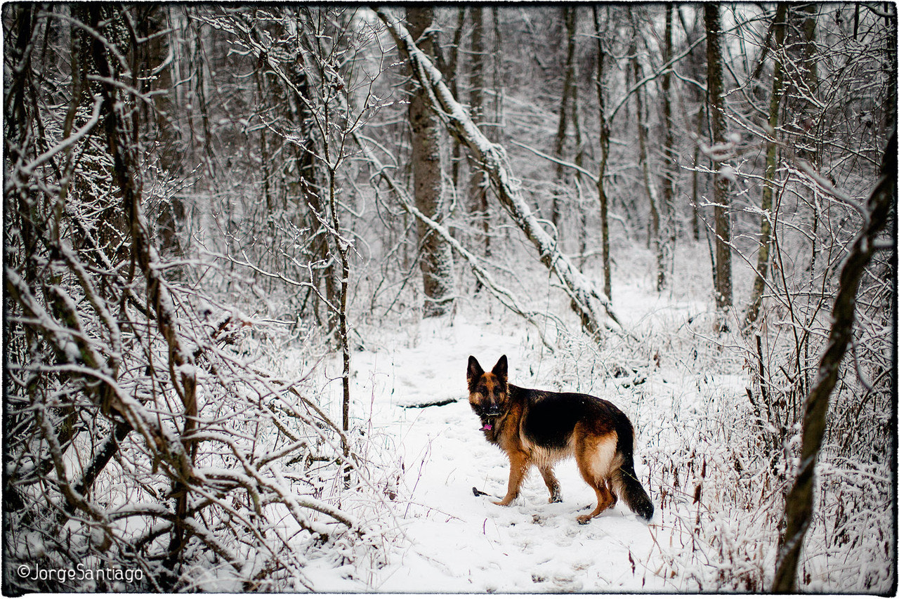 Photograph Winter Dog by jlsantiago on 500px
