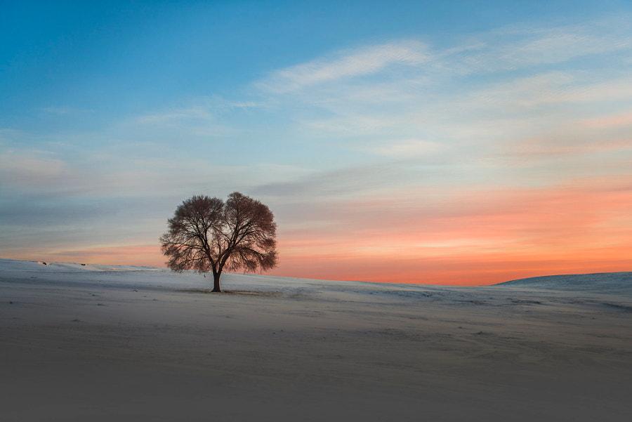 寂寞的树, автор — 东北摄影人  на 500px.com