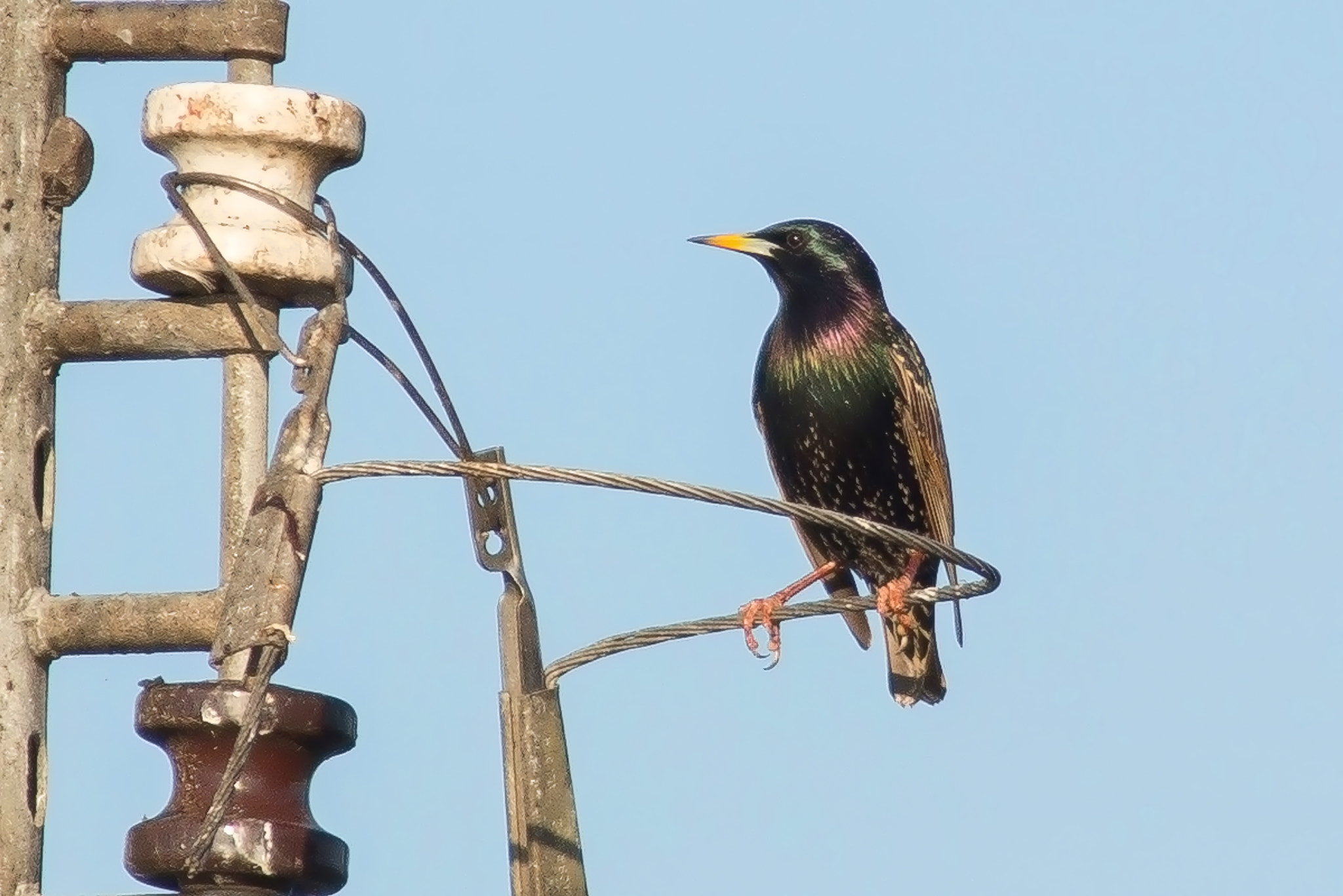 Photograph Starling by George Bloise on 500px