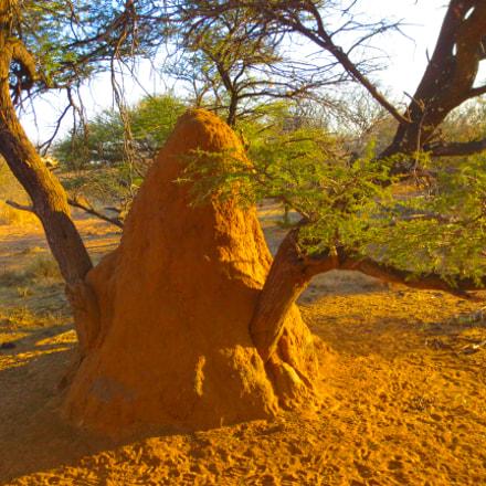 termites hills, Canon IXUS 125 HS