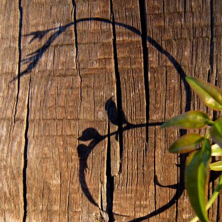 Leaf shadows, Fujifilm FinePix E510