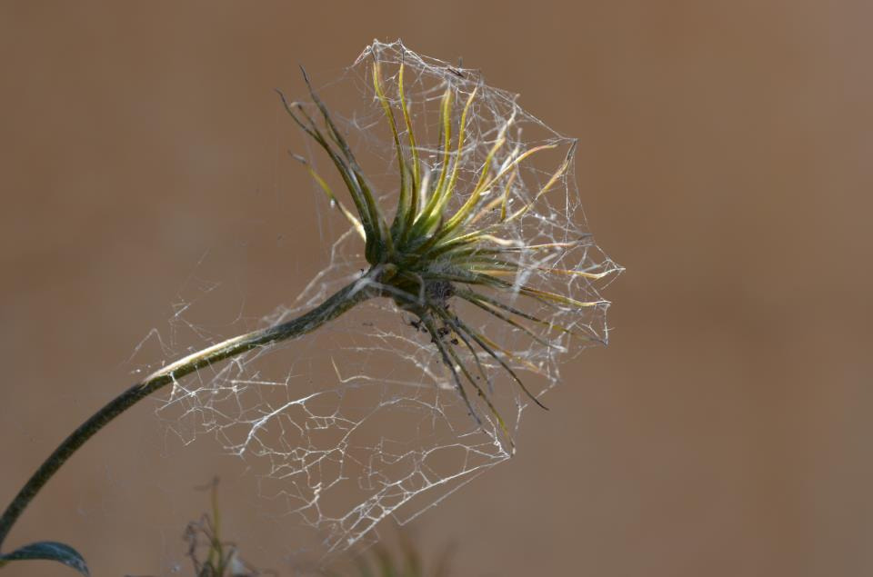 Photograph Webs by Lori Conklin on 500px