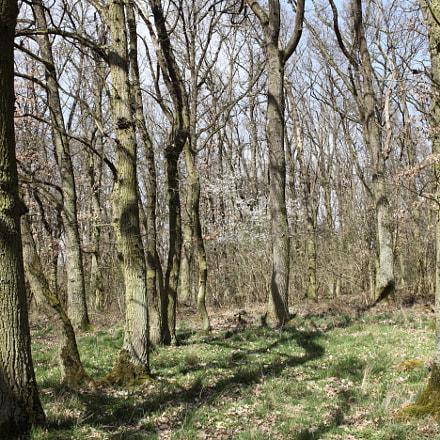 Sunny Oak Trees, Canon EOS 5D MARK II, Canon EF 35mm f/2