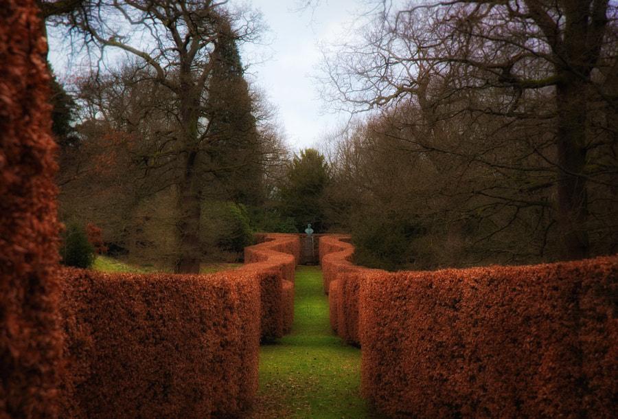 Serpentine Beech Hedge at Chatsworth Gardens, автор — Gordon Tweedale на 500px.com