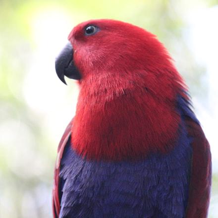 birds in loropark, teneriffa, Canon EOS 650D, Canon EF 70-200mm f/4L IS