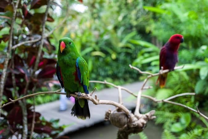 A green parrot at Bali Zoo