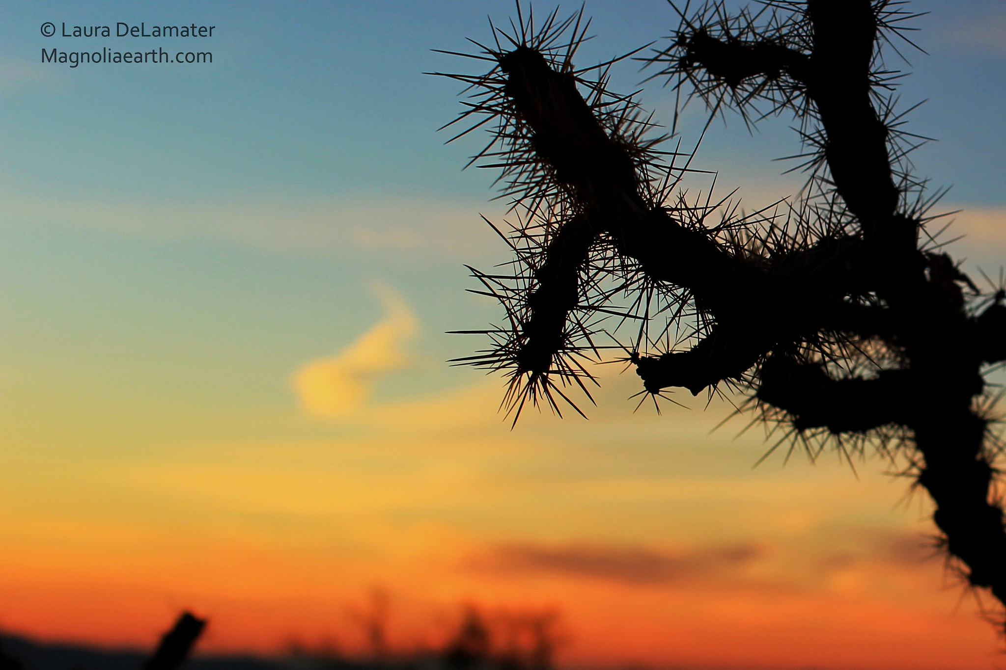 Photograph Cacti at Sunset by Laura DeLamater on 500px