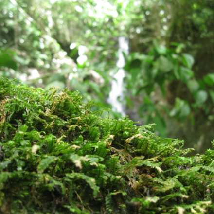 Moss macro, Canon POWERSHOT A3100 IS