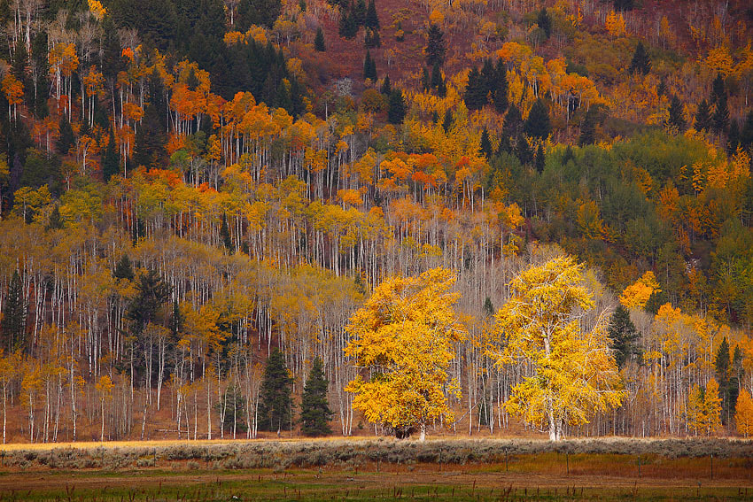 Photograph aspen chorus by donald luo on 500px