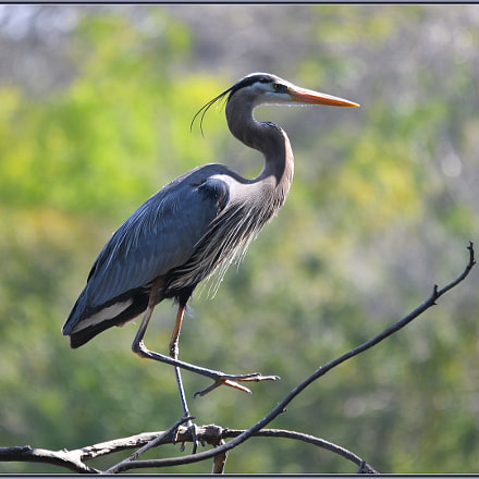 Bird Yoga, Nikon D850, Sigma APO 120-400mm F4.5-5.6 DG OS HSM