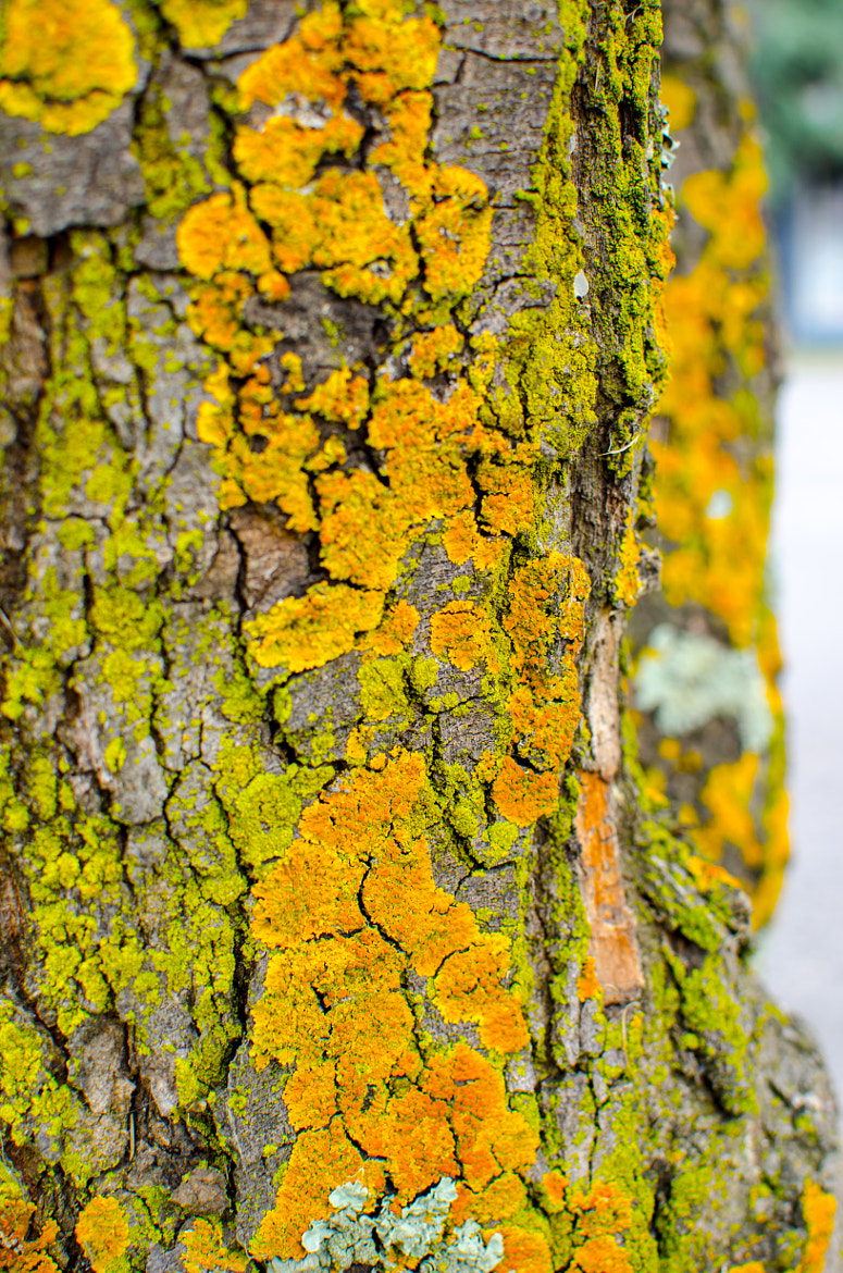 Photograph Tree by Eric Ball on 500px