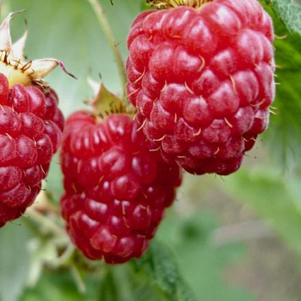 Raspberries , Sony DSC-W17