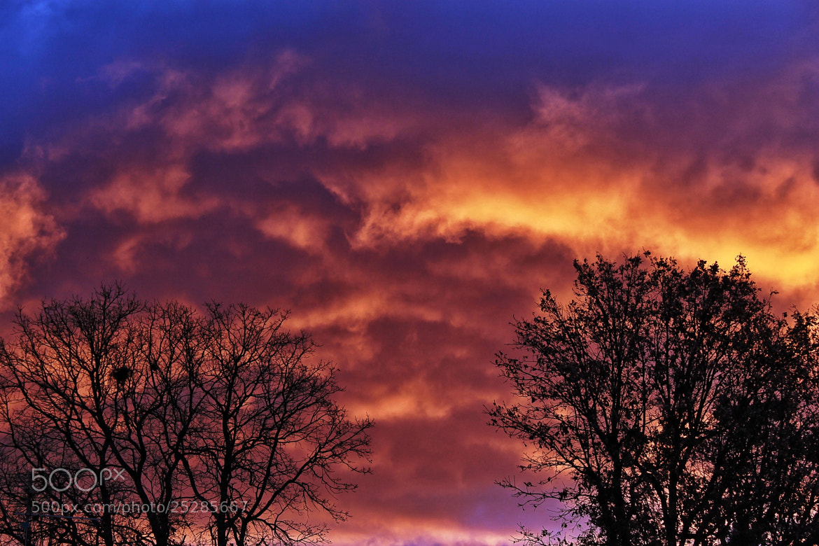 Photograph fire flame while still by richard cauchy on 500px