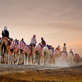 camel ride by ummer ta (UmmerTa)) on 500px.com